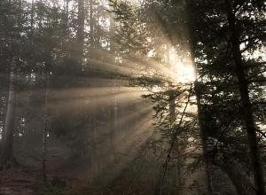Foto 12 Sol bak tre 30x22cm 8bit200dpi AdobeRGB