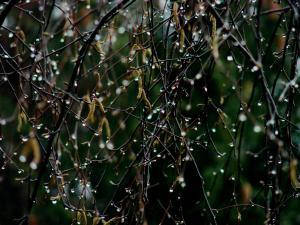Foto 2 Regndråper 30x22,5cm 8bit200dpi AdobeRGB